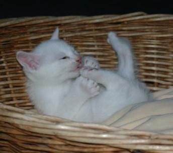 Here I am doing kitty yoga.