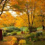 West Hill Gardens Fall